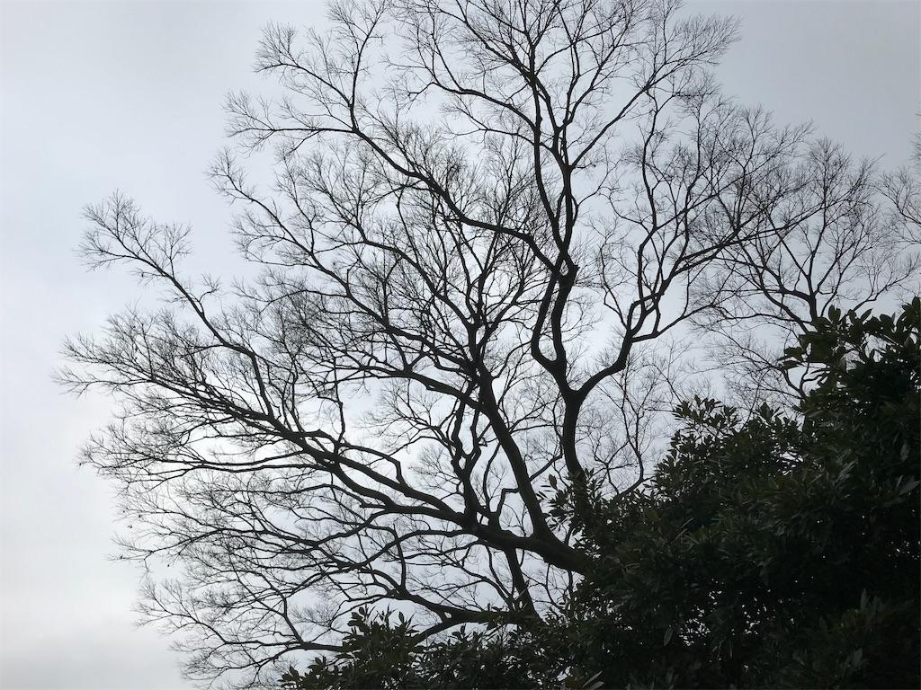 f:id:yokohamamiuken:20190227132047j:plain