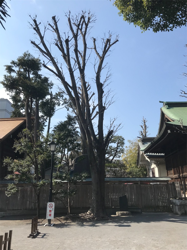 f:id:yokohamamiuken:20190302162636j:image