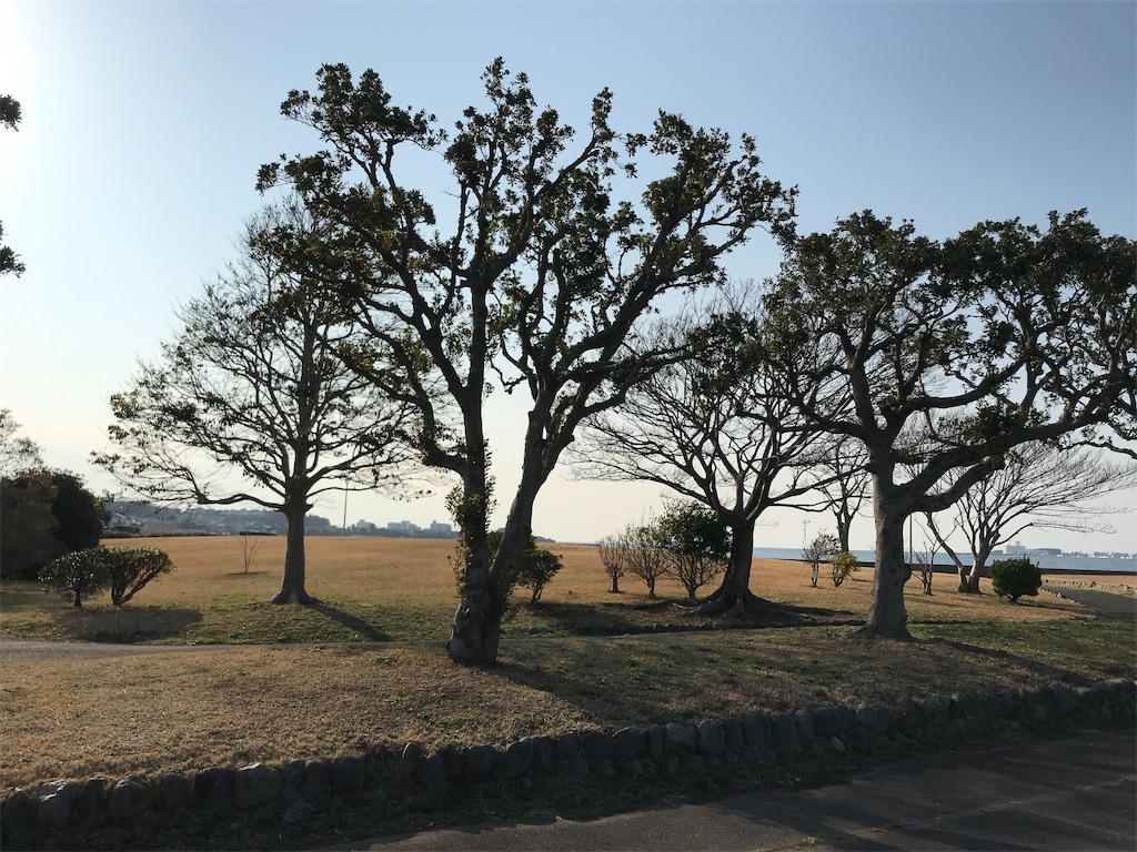 f:id:yokohamamiuken:20190306102630j:image
