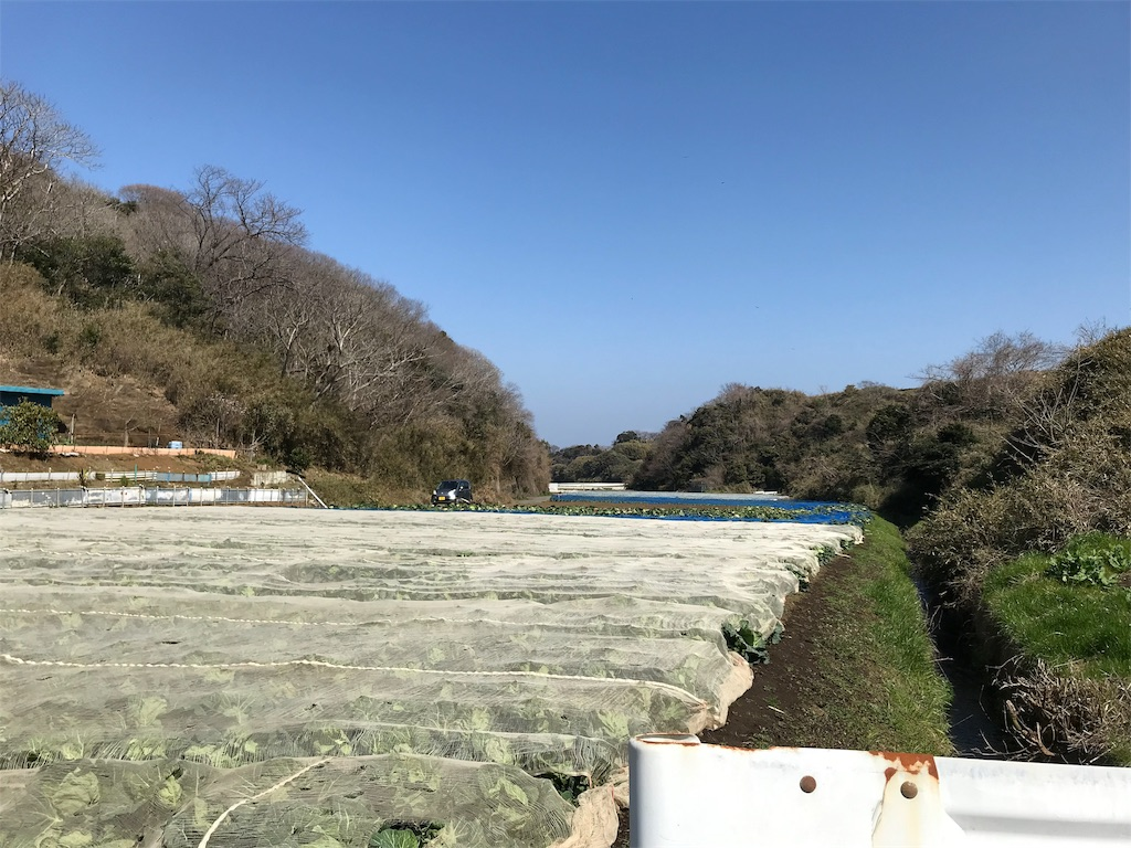 f:id:yokohamamiuken:20190306112203j:image