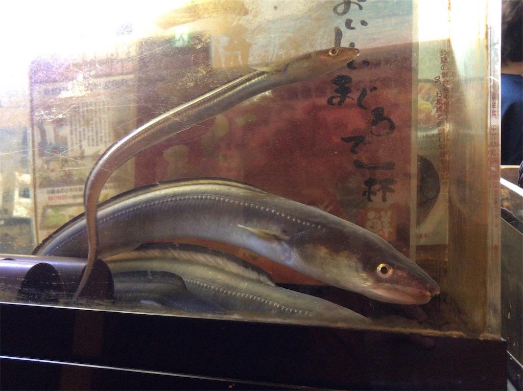 f:id:yokohamamiuken:20190319225306j:image