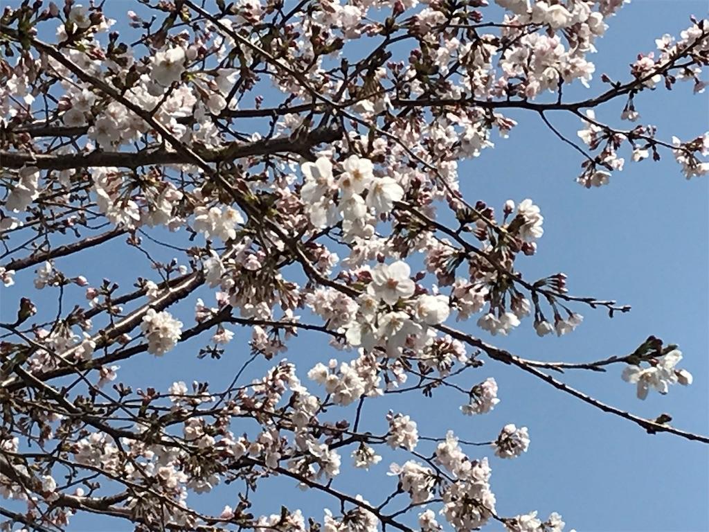 f:id:yokohamamiuken:20190325121538j:image