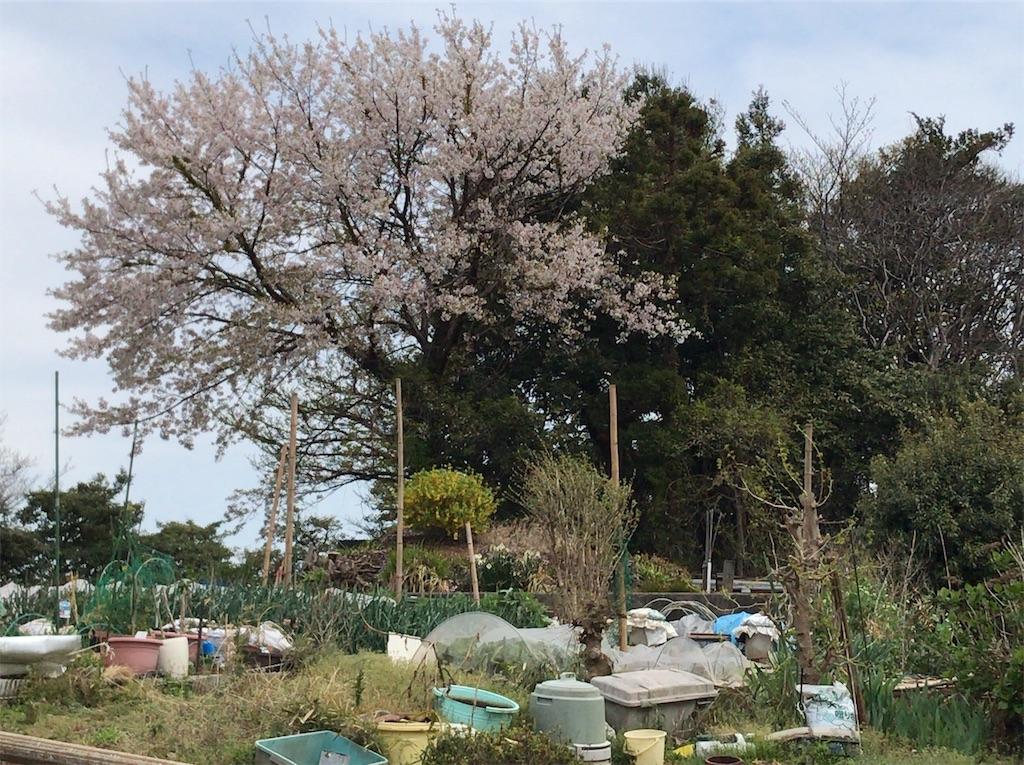 f:id:yokohamamiuken:20190408223221j:image