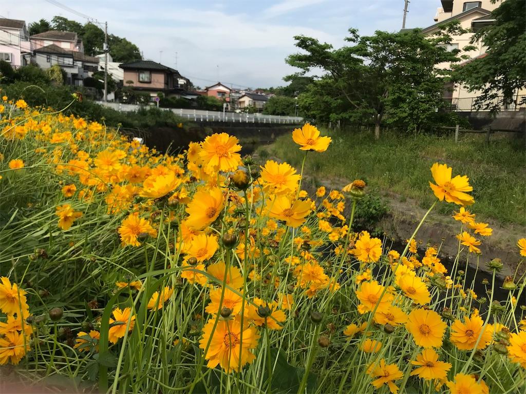f:id:yokohamamiuken:20190529212255j:image