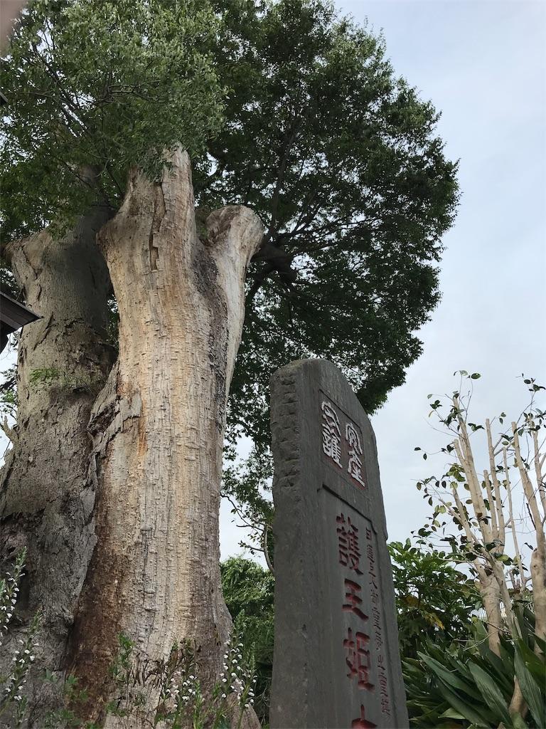 f:id:yokohamamiuken:20190529212319j:image