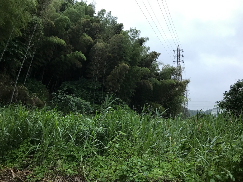 f:id:yokohamamiuken:20190609213058j:image