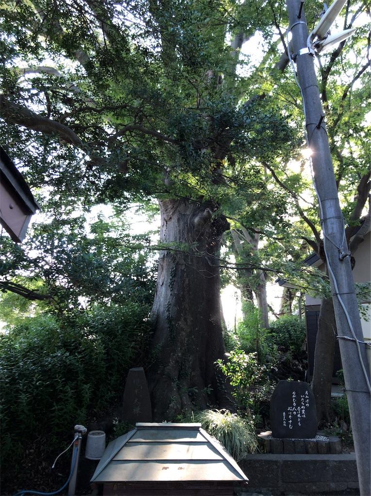 f:id:yokohamamiuken:20190920184700j:image