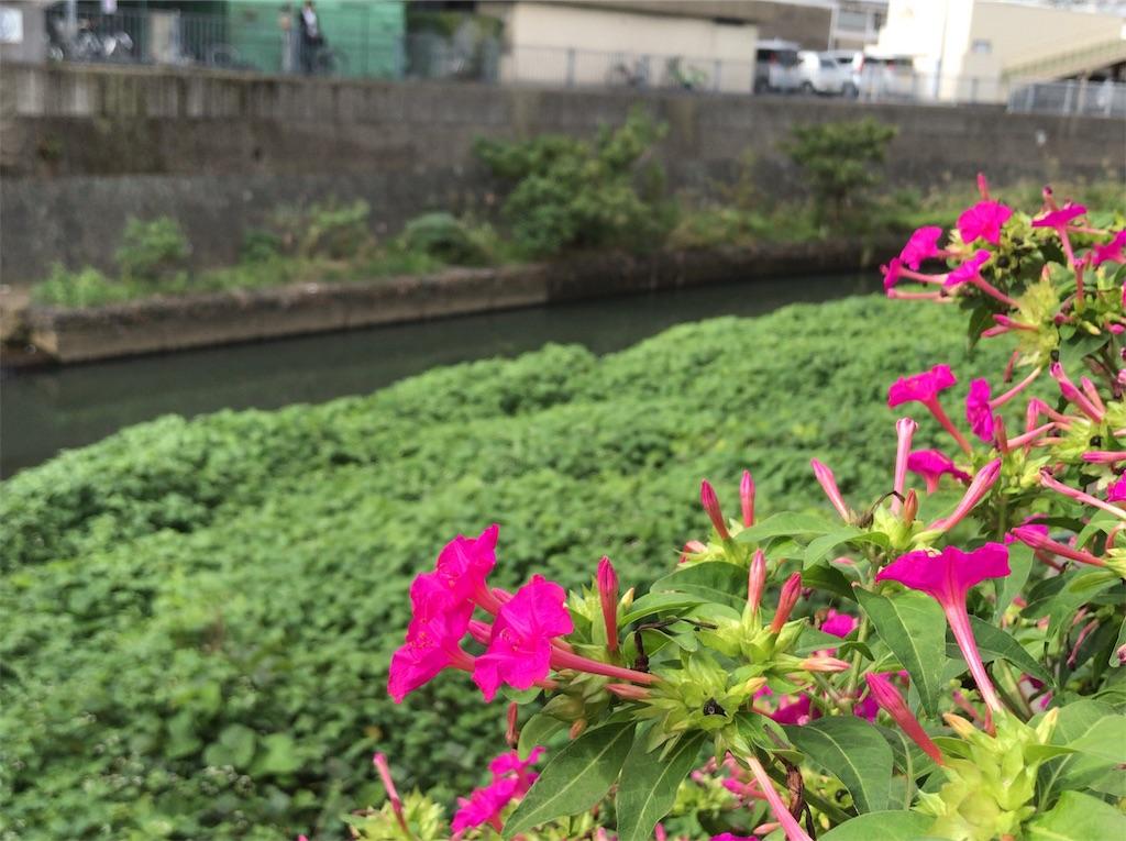 f:id:yokohamamiuken:20191010103341j:image
