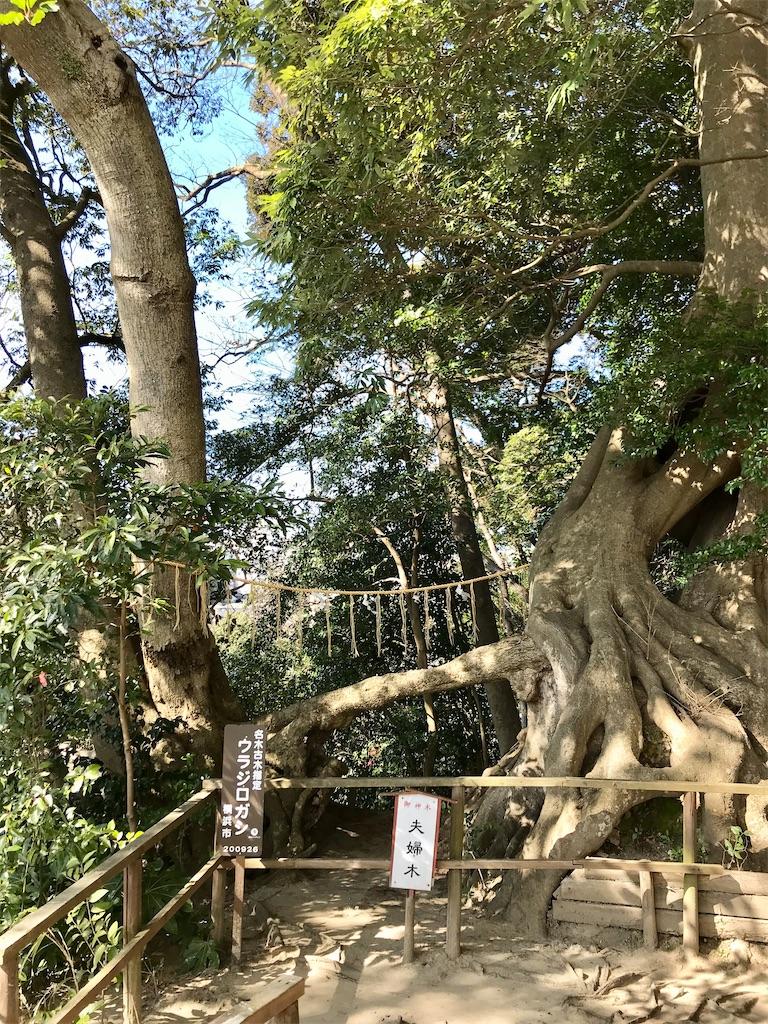 f:id:yokohamamiuken:20200210153848j:image