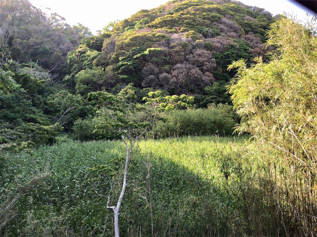 f:id:yokohamamiuken:20200518092321j:image