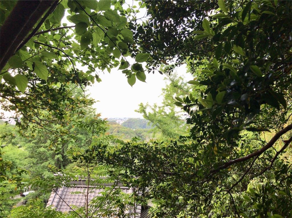 f:id:yokohamamiuken:20200518093243j:image