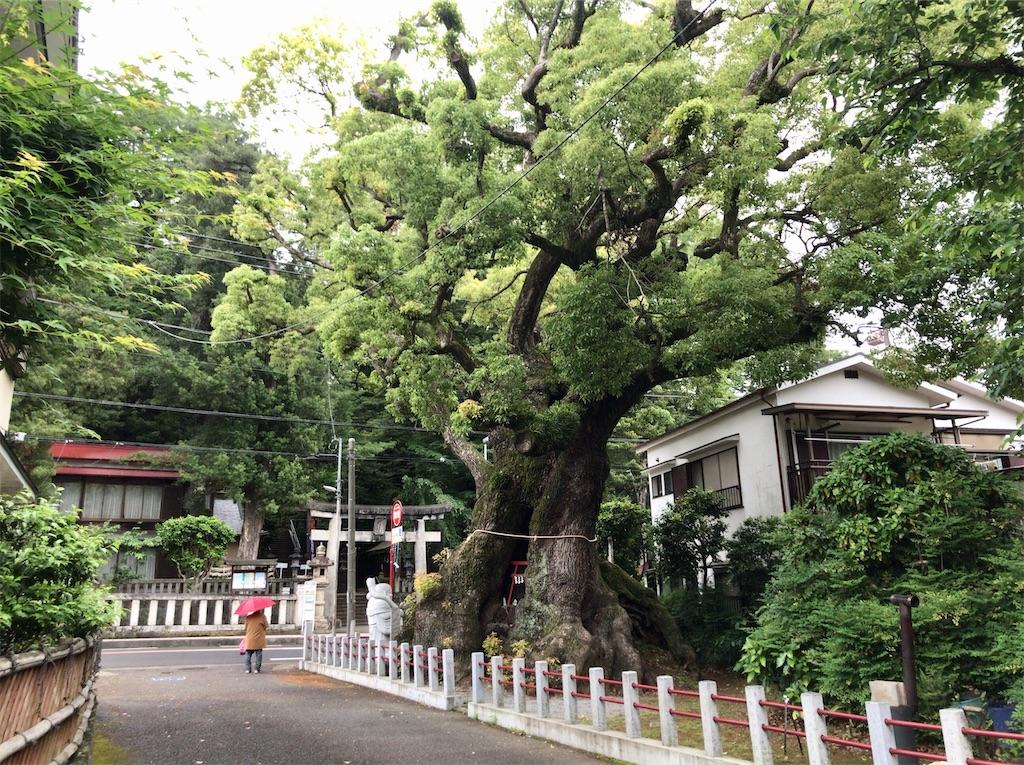 f:id:yokohamamiuken:20200521202526j:image