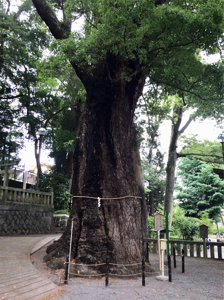 f:id:yokohamamiuken:20200521202614j:image