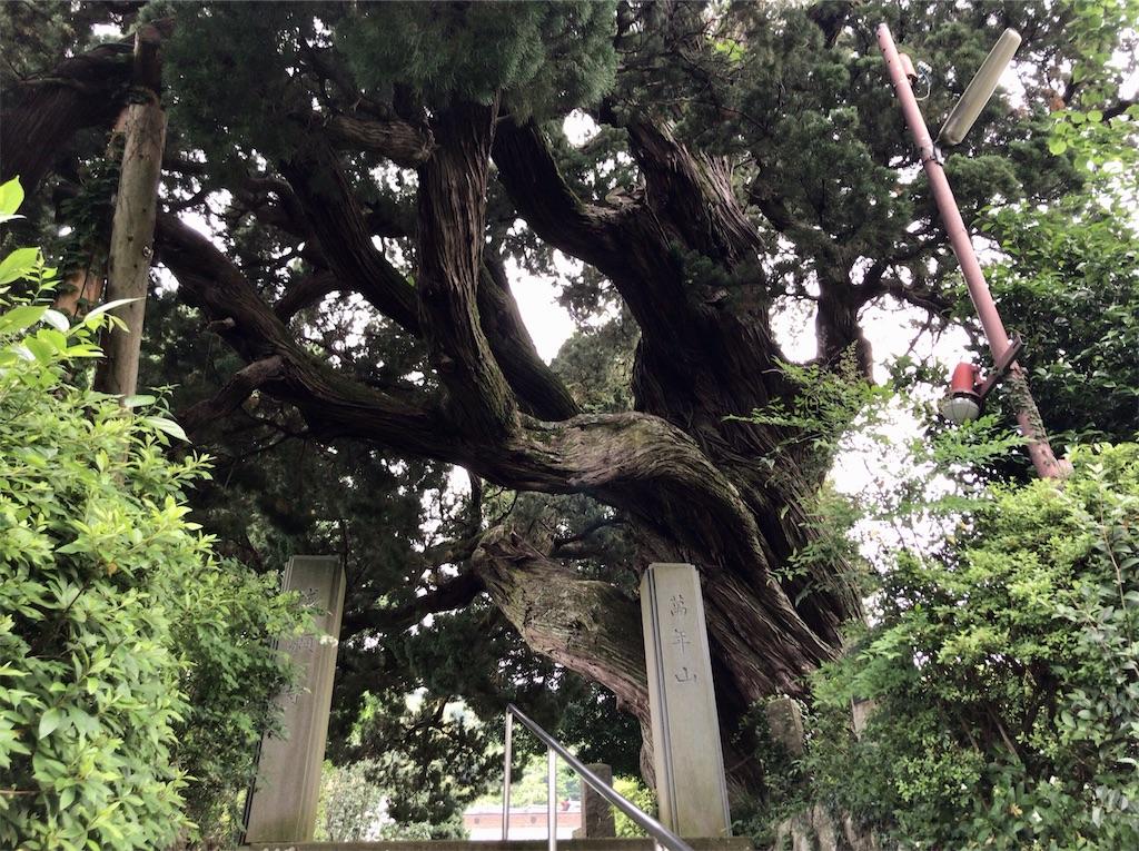 f:id:yokohamamiuken:20200521203648j:image