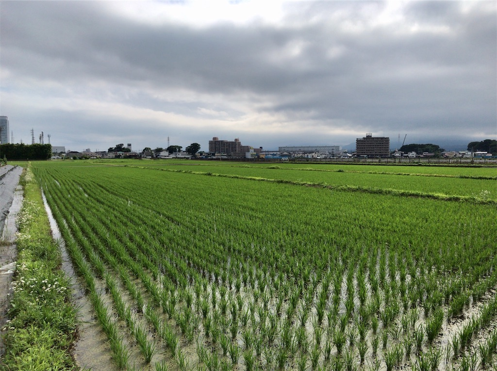 f:id:yokohamamiuken:20200626052041j:image
