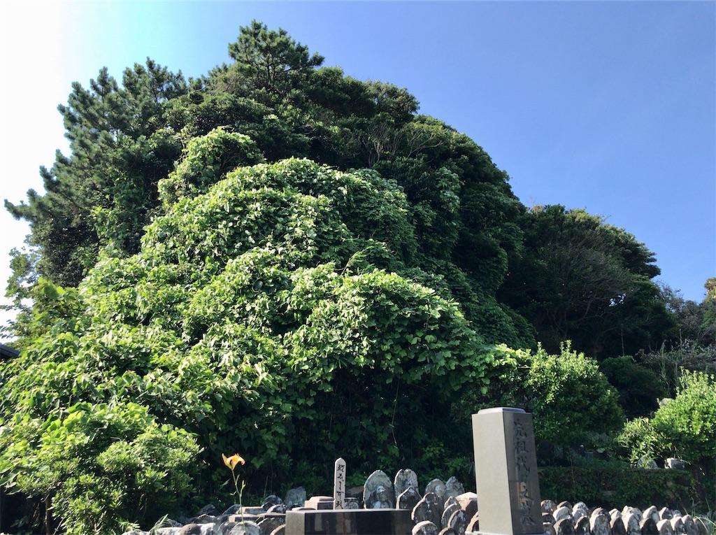f:id:yokohamamiuken:20200804181346j:image
