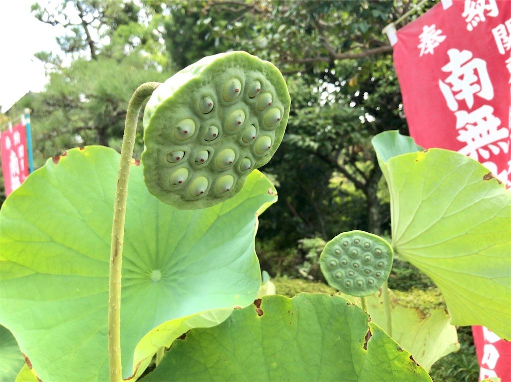 f:id:yokohamamiuken:20200828131451j:image