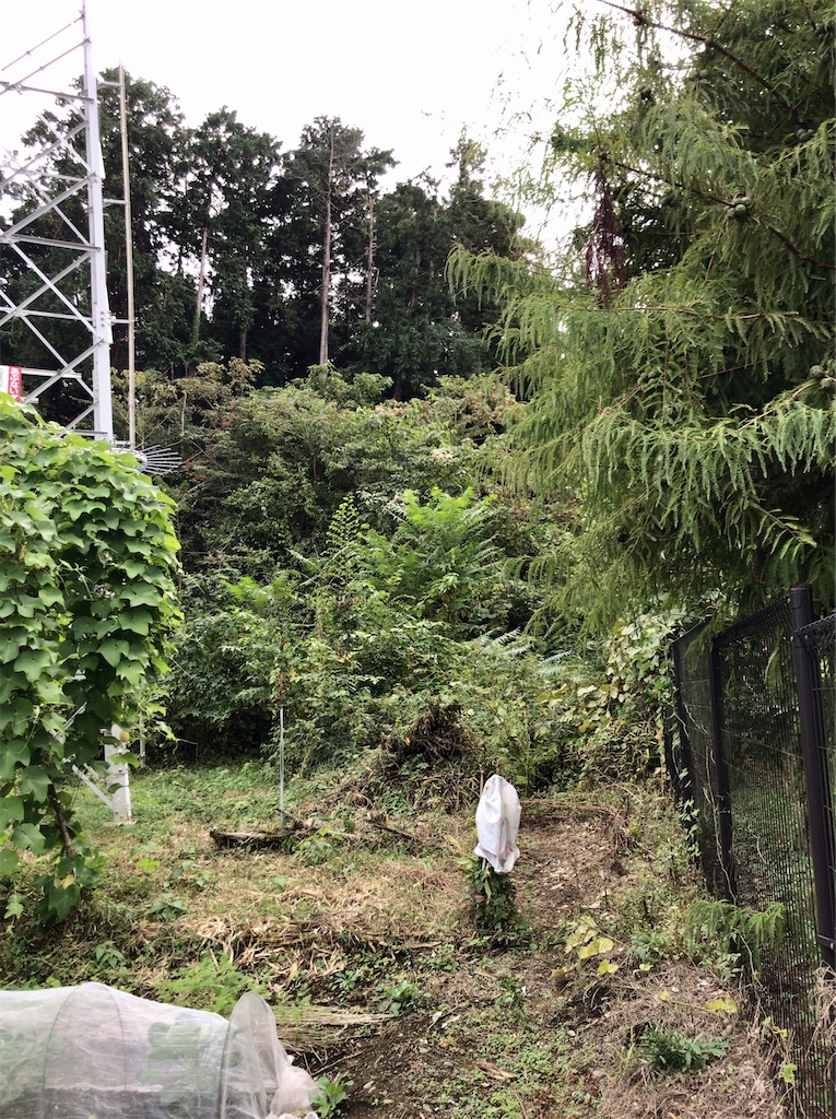 f:id:yokohamamiuken:20201023101333j:image