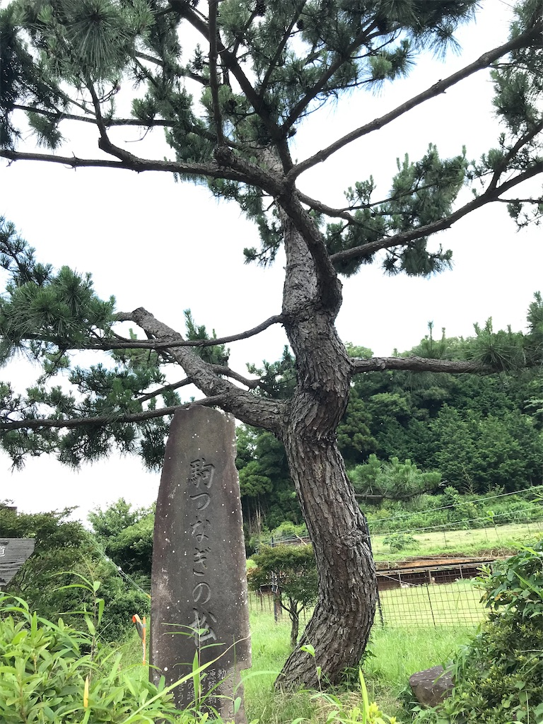 f:id:yokohamamiuken:20210624222018j:image