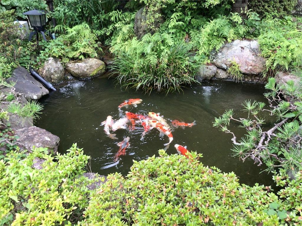 f:id:yokohamamiuken:20210707163125j:image