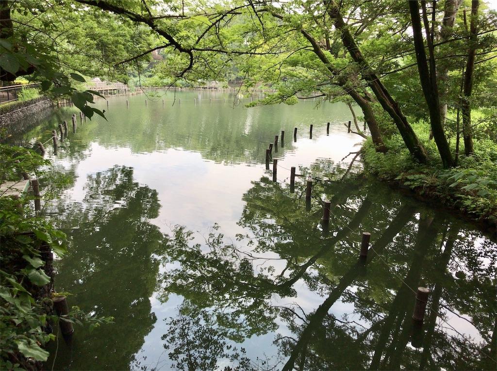 f:id:yokohamamiuken:20210707163832j:image