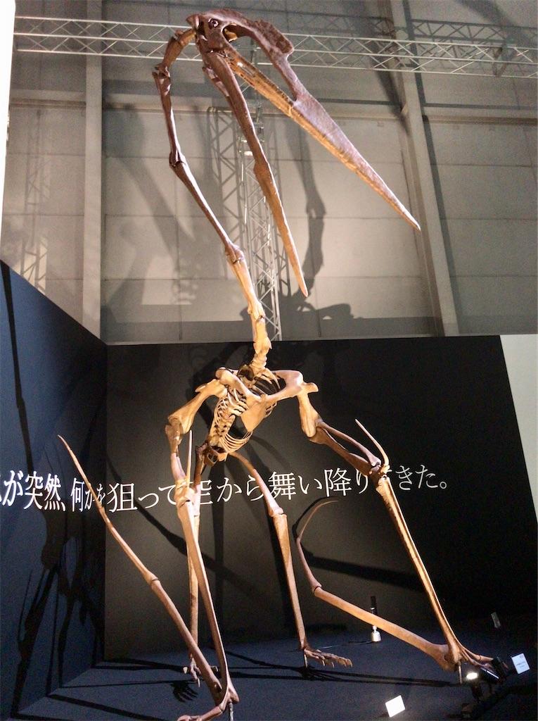 f:id:yokohamamiuken:20210810210324j:image