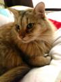 恒久的可愛猫