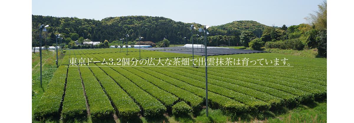 f:id:yokosai:20190804160732p:plain