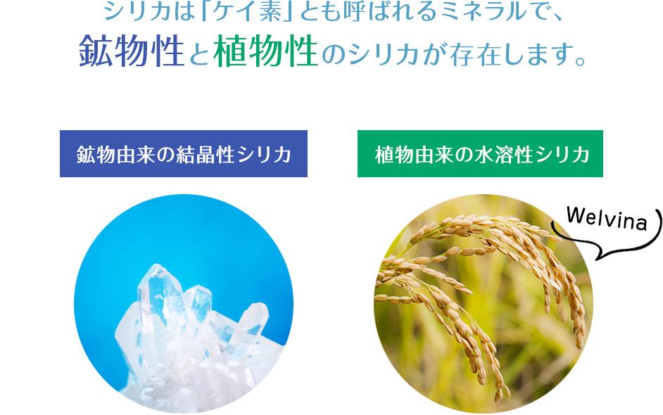f:id:yokosai:20190814164644j:plain