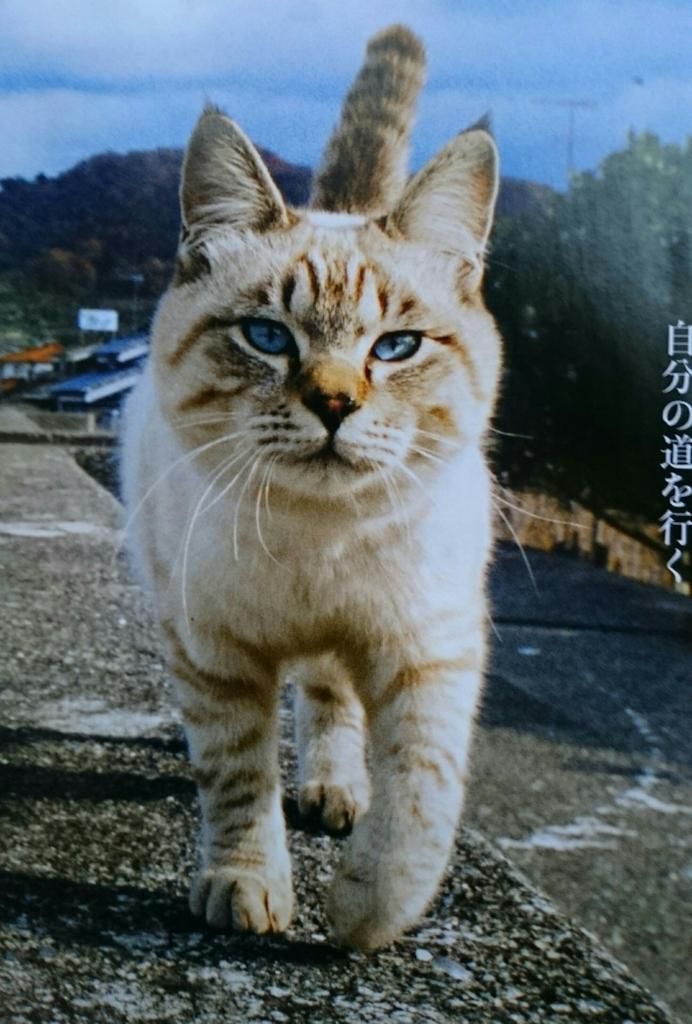 f:id:yokosuka206rc:20170516192751j:plain