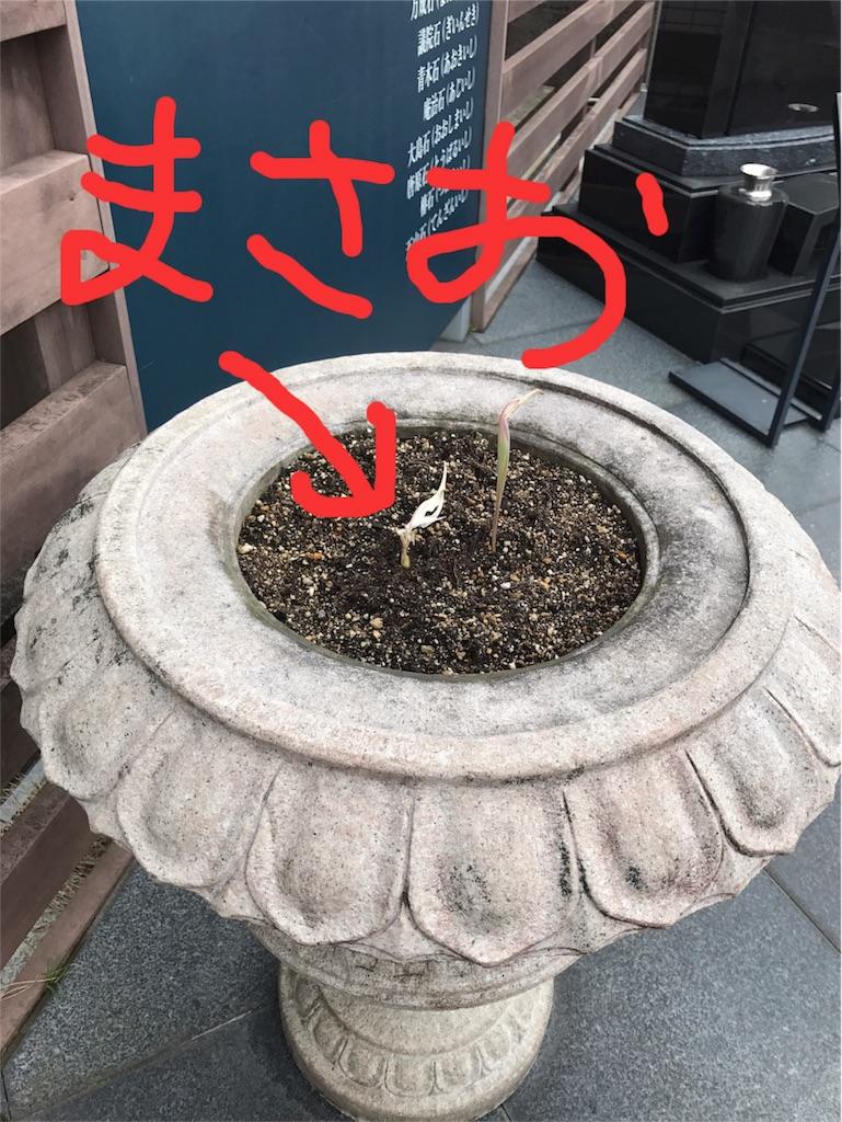 f:id:yokota-sekizai:20170314101633j:image