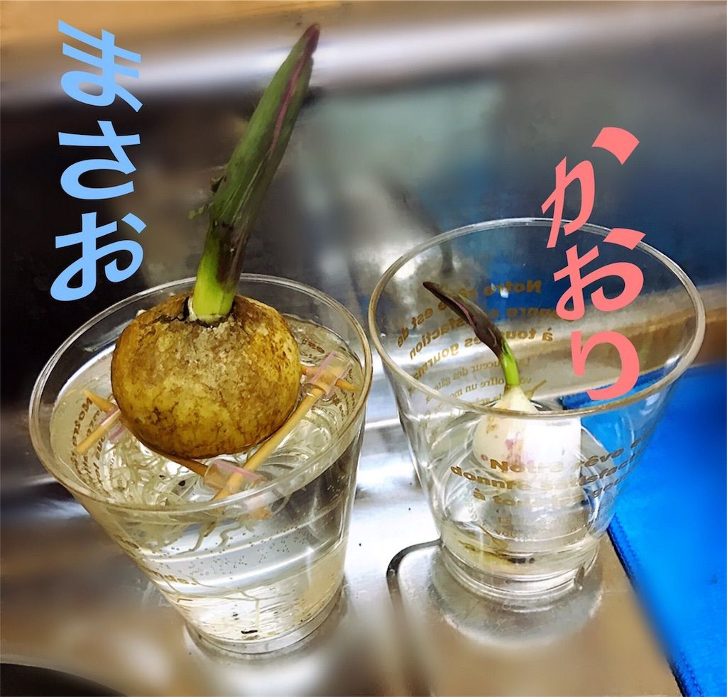 f:id:yokota-sekizai:20170503180220j:image