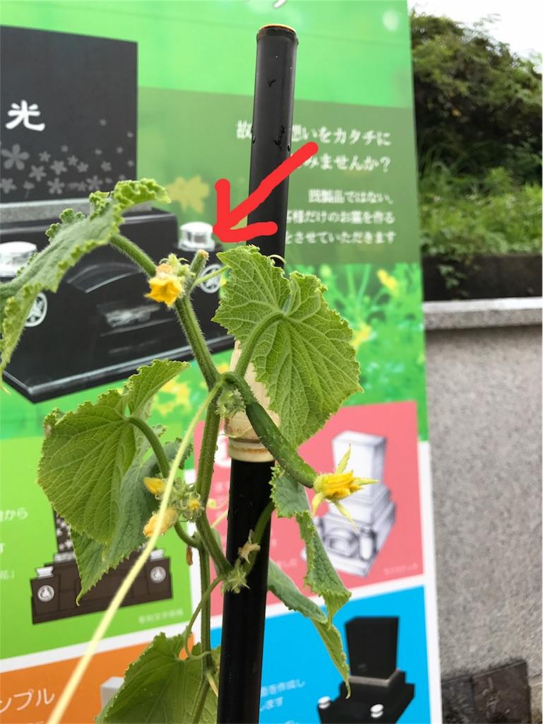 f:id:yokota-sekizai:20170716182107j:image