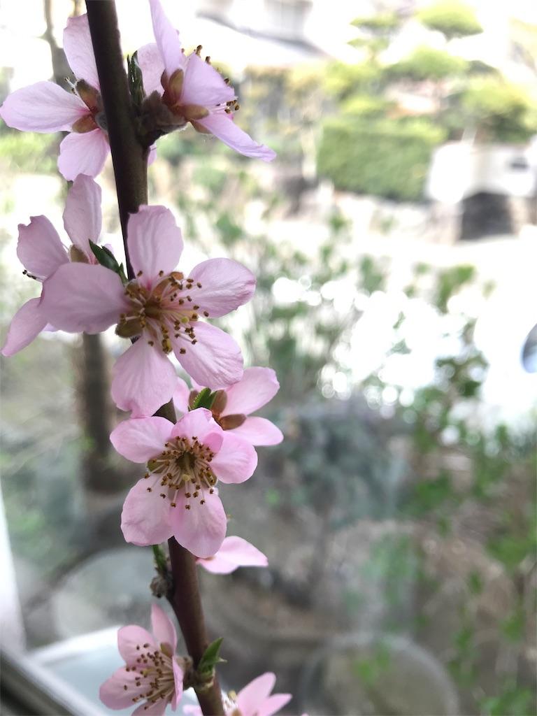 f:id:yokota-sekizai:20180402215212j:image