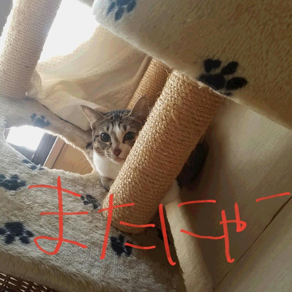 f:id:yokoyoko1111:20170306165706j:plain