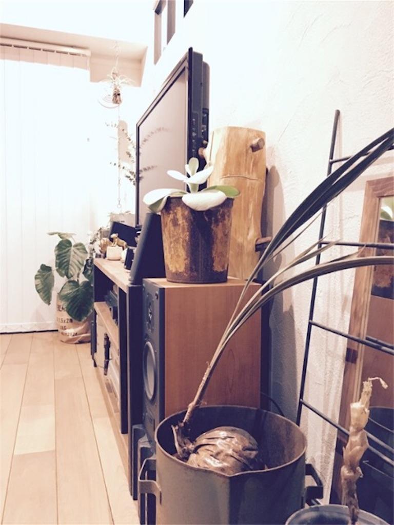 リノベーションで造作した室内窓とそのまわりに置いたグリーンインテリア