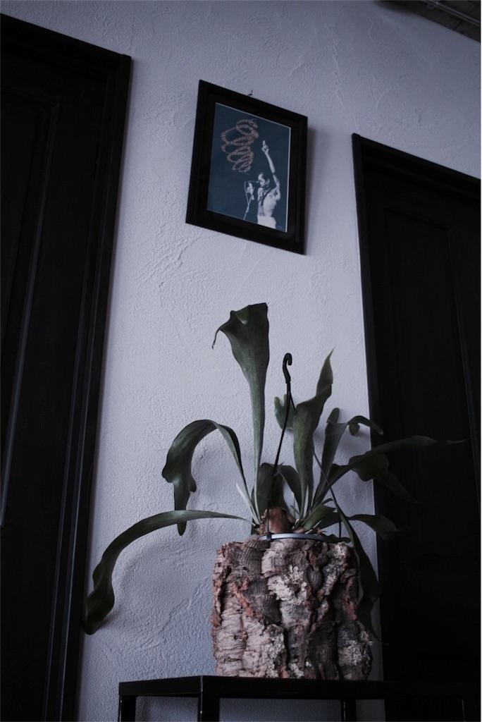 フェラクティの絵とコウモリラン