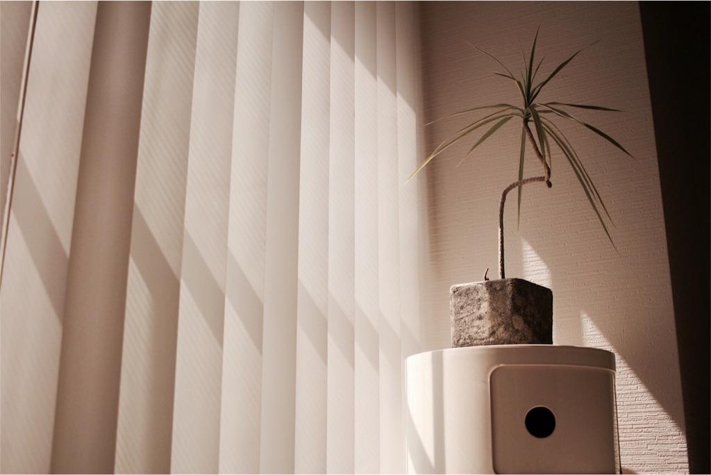 寝室の窓際に置いた観葉植物