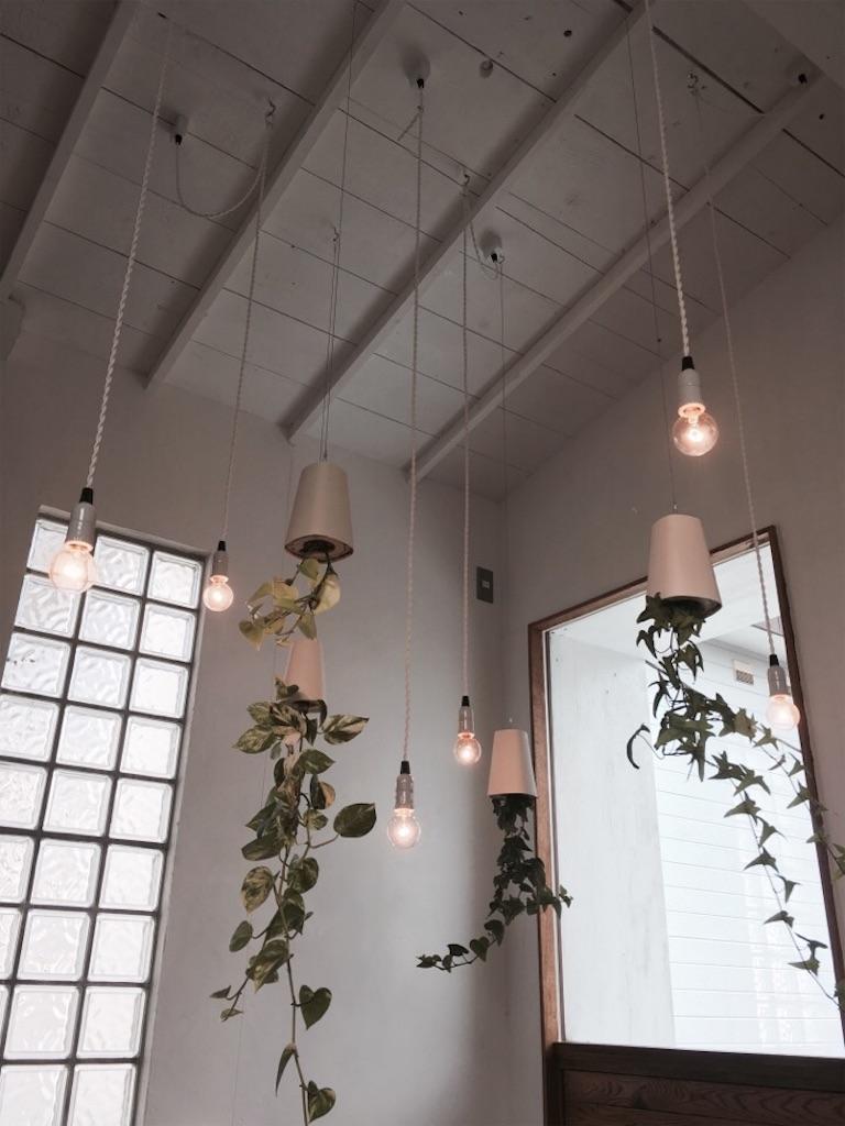 けんちくとカフェkanna店内の植物たち
