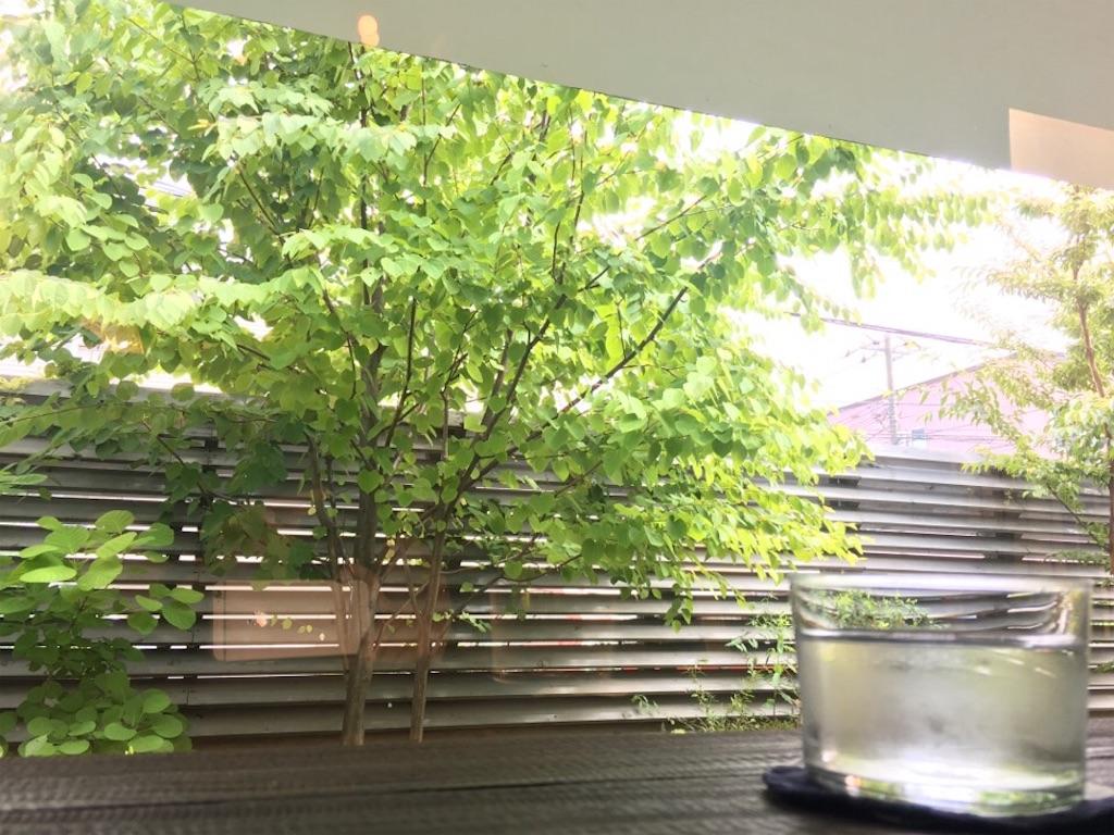 窓際の席から見える庭