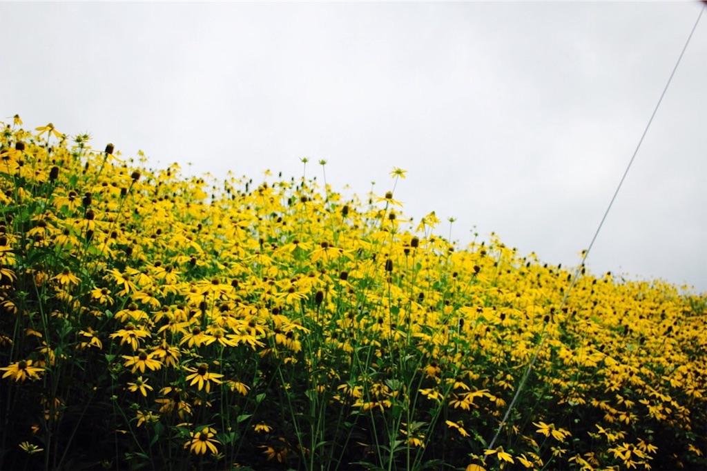 東川町で見つけた花畑