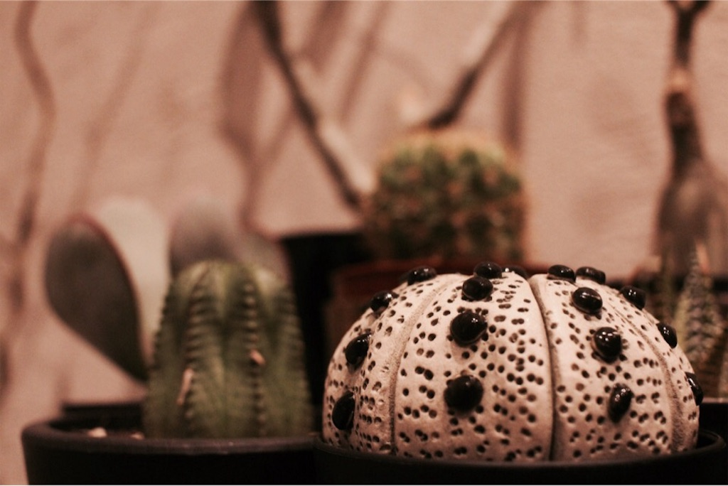 本物の植物と一緒に並べた陶植