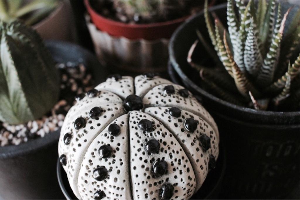 セラミックボタニカルの陶植