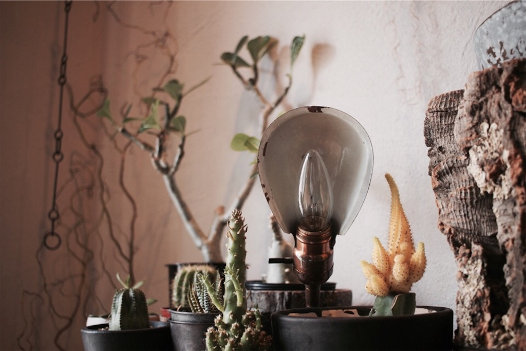 LEVITON社のヴィンテージランプと多肉植物
