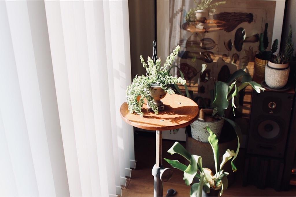 フリソクラマーのヴィンテージスツールと多肉植物