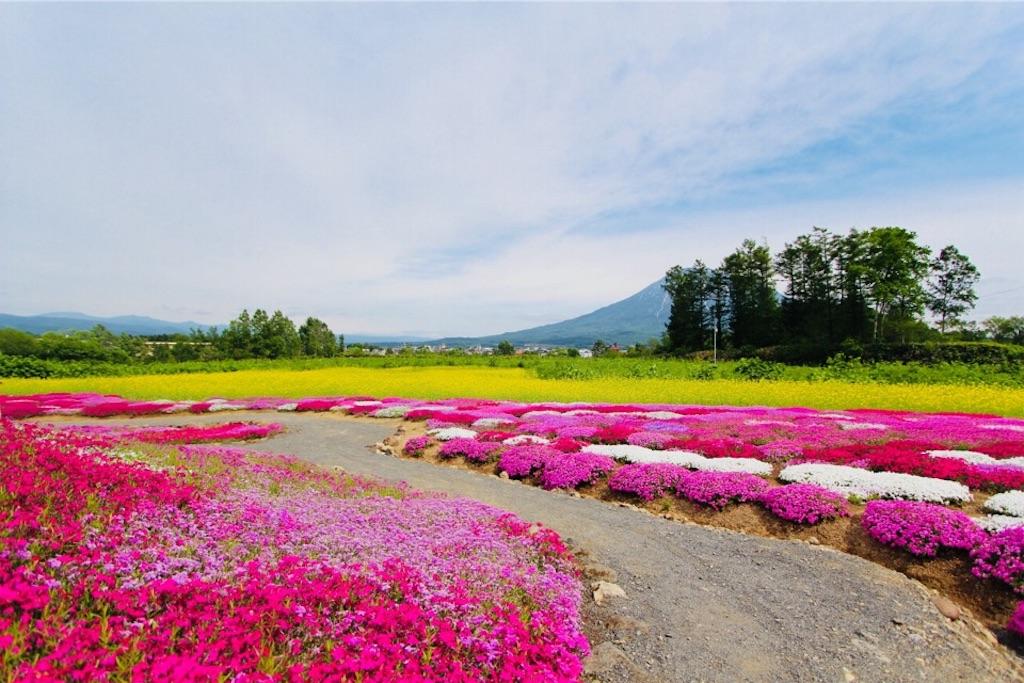 倶知安名物三島さんの芝桜庭園