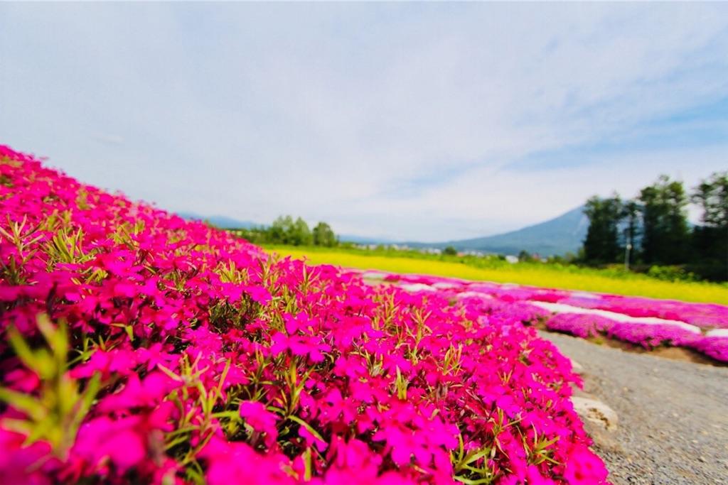 倶知安にある三島さんの芝桜庭園
