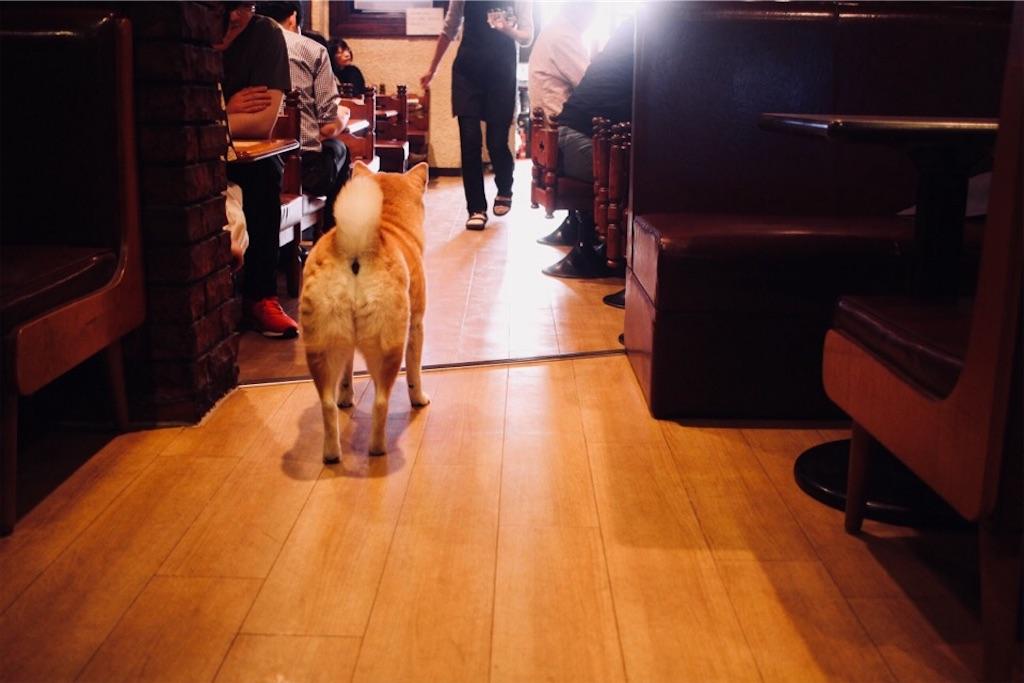 喫茶「オットー」看板犬トモちゃんの後ろ姿