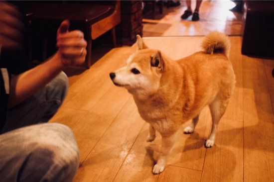 喫茶「オットー」看板犬トモちゃんのおやつタイム