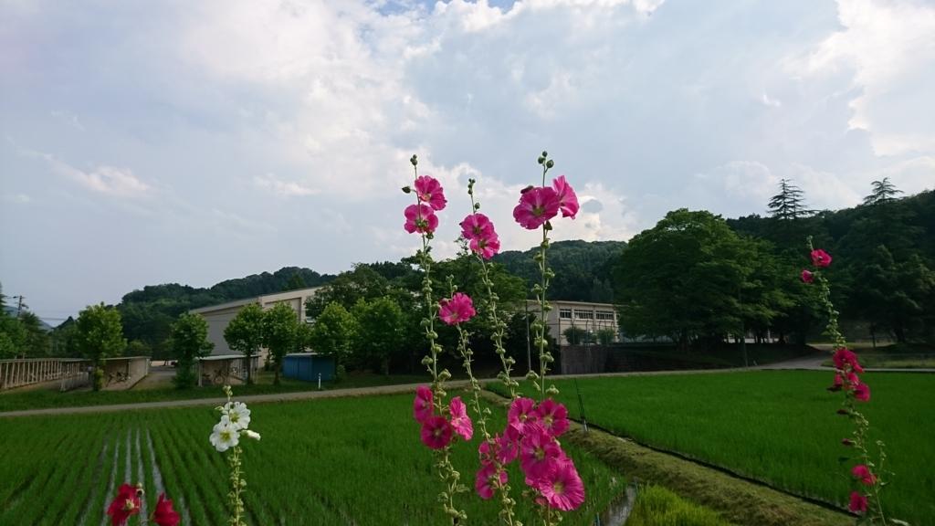 f:id:yokozukioyaji:20170701205340j:plain